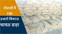 गोदामों में रखा हजारों क्विंटल चावल सड़ा