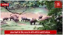 जमशेदपुर: दलमा जंगल में वापस लौटा हाथियों का झुंड