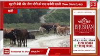 Mandi की इन दो जगहों पर बनेगी जिला की पहली Cow Sanctuary