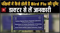 पक्षियों में कैसे होती है Bird Flu की पुष्टि ,डॉक्टर से लें जानकारी