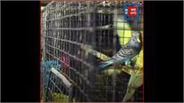 देश में 9 राज्यों में पोल्ट्री फार्म के पक्षियों में बर्ड फ्लू की पुष्टि