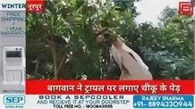 नूरपुर की रिट पंचायत के बागवान ने बगीचे में लगाए चीकू के पेड़,सरकार से उठाई ये मांग