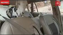 चोरों के हौंसले बुलंद,नयना देवी के कल्लर से इनोवा गाड़ी में बकरियां लेकर हुए फरार,