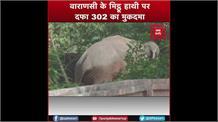 डेढ़ साल से हत्या के आरोप में  कैद है हाथी 'मिठ्ठू',पैरोल पर रिहाई की जगी उम्मीद