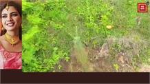 अद्भुत... भतीजे ने ऐसे दी श्रद्धांजलि की बदल डाली जंगल की 'सूरत', चाचा की याद में लगाए 505 पौधे