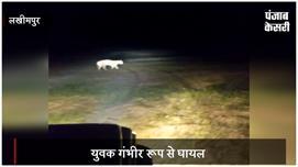 लखीमपुर खीरी में बाघ का आतंक: युवक पर...