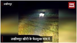 गांव में घूम रहा है बाघ, दहशत में...