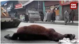 बांदीपोरा में मर गई इंसानियत ! ...सड़क...