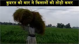 कुदरत की मार ने किसानों की तोड़ी कमर,...