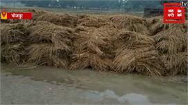 BHOJPUR:  बारिश ने किसानों की मेहनत पर...