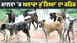 ਖੁੰਖਾਰ Dogs ਨੋਚ-ਨੋਚ ਖਾ ਗਏ 45 Sheeps