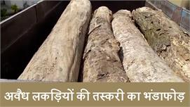 Forest council की बड़ी कार्रवाई, Illegal...