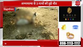 UP में गौशालाओं का हाल-बेहाल, मृत गायों...