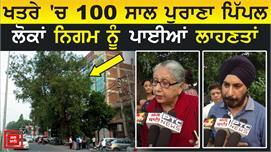 क्या 100 साल पुराने Pipal Tree को बचा...