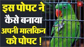 Parrot और उसकी मालकिन के बीच हुई बहस को...