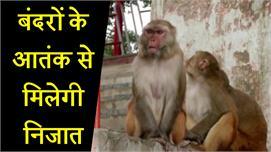 शिमला शहर को बंदरों के आतंक से आजाद...