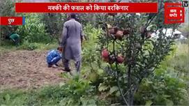 श्रीनगर के बाद पुंछ में भी सेब की बम्पर...