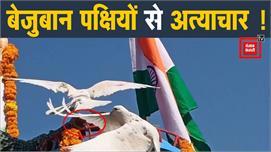 गणतंत्र दिवस समारोह पर बेजुबान पक्षियों...