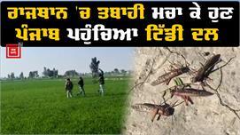 Punjab 'ਚ Tiddi Dal ਦੀ Entry, ਕਿਸਾਨਾਂ...