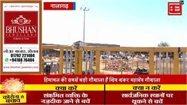 शिव शंकर महादेव गौशाला के 800 गौवंशों...
