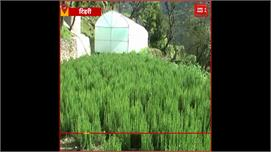 Tehri:हर्वल खेती करके युवाओं को किया...