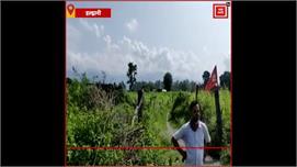 Haldwani:बुजुर्ग महिला को हाथी...