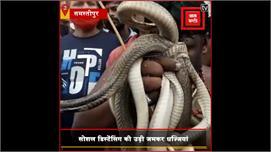 Samstipur में लगा 'सापों' का मेला...