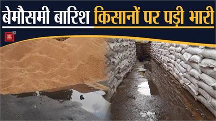 बारिश ने फेरा किसानों की मेहनत पर पानी, , मंडियों में पड़ा हजारों क्विंटल गेहूं भीगा