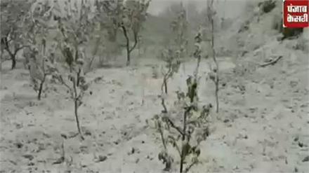 देखिए ऊपरी इलाकों में भारी बर्फबारी ने कैसे की तबाही, बागवानों की तोड़ी कमर, सेब पर संकट
